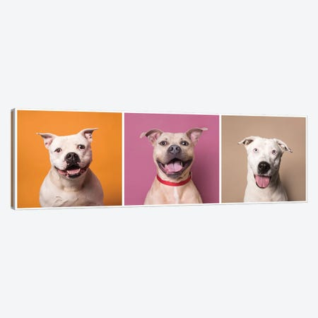 Laughing Rescue Dogs: Patton, Bullet And Ariel Canvas Print #SGM62} by Sophie Gamand Canvas Art Print