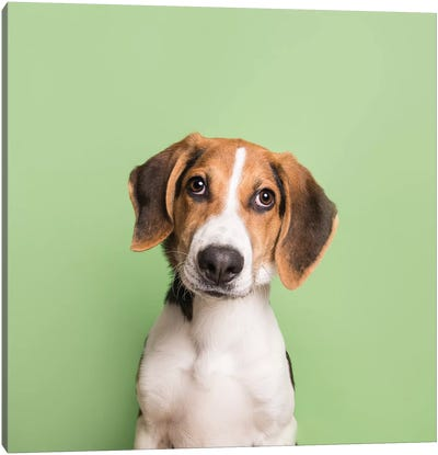 Marshall The Rescue Puppy Canvas Art Print