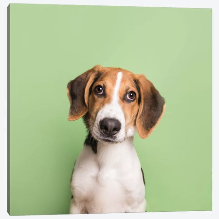 Marshall The Rescue Puppy 3-Piece Canvas #SGM64} by Sophie Gamand Canvas Art
