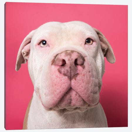Nico The Rescue Dog Canvas Print #SGM65} by Sophie Gamand Canvas Artwork