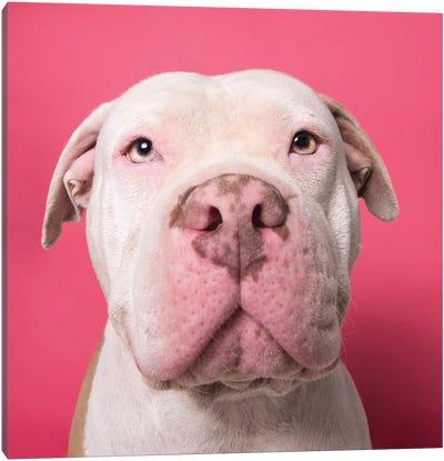 Nico The Rescue Dog Canvas Art Print