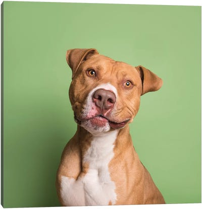 Apollo The Rescue Dog Canvas Art Print