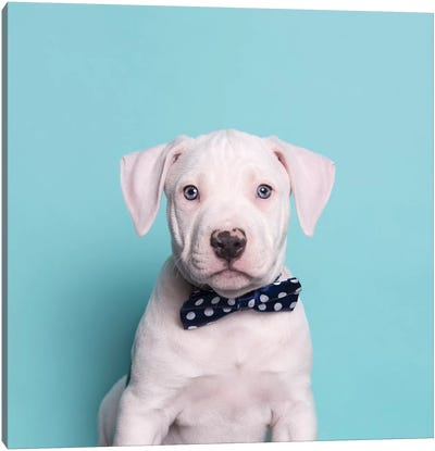 Parlay The Rescue Puppy Canvas Art Print
