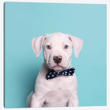 Parlay The Rescue Puppy Canvas Print #SGM70} by Sophie Gamand Canvas Artwork