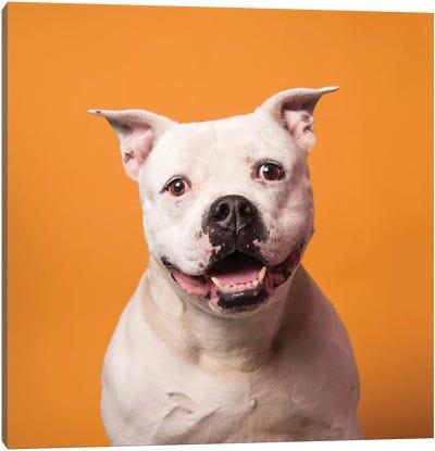 Patton The Rescue Dog Canvas Art Print