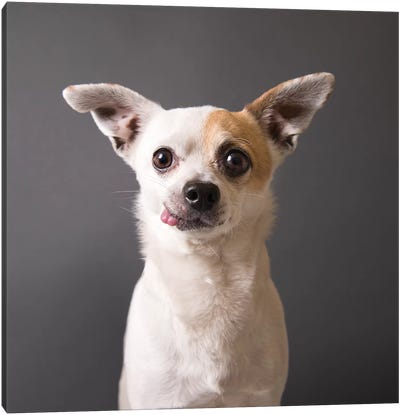 Peanut The Rescue Dog Canvas Art Print