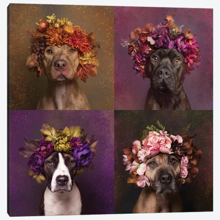 Pit Bull Flower Power, Brenda, Chopper, Suzie And Sweetie 3-Piece Canvas #SGM77} by Sophie Gamand Art Print
