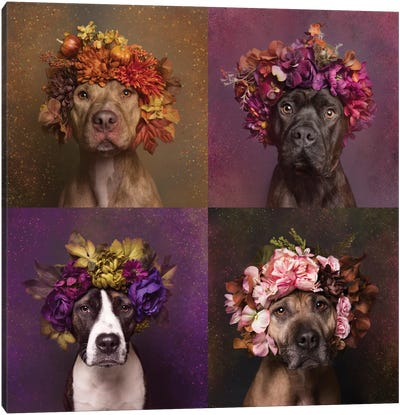 Pit Bull Flower Power, Brenda, Chopper, Suzie And Sweetie Canvas Art Print