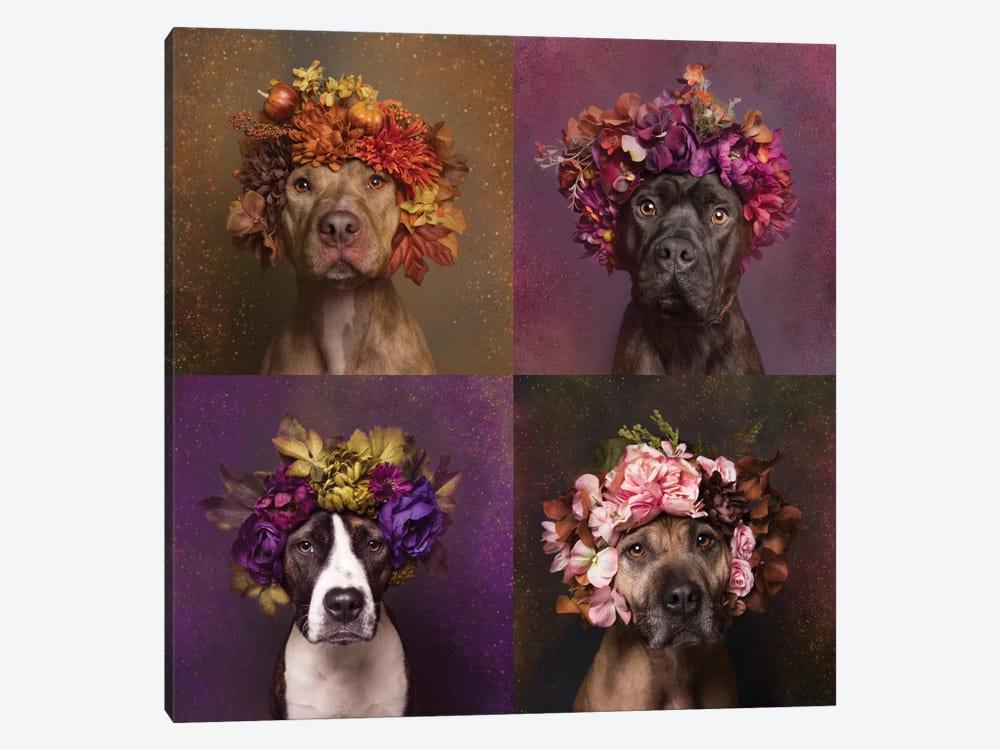 Pit Bull Flower Power, Brenda, Chopper, Suzie And Sweetie by Sophie Gamand 1-piece Canvas Art Print
