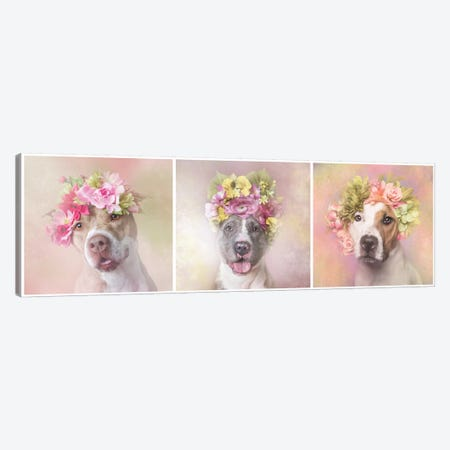 Pit Bull Flower Power, Bridie, Dice And Chita Canvas Print #SGM78} by Sophie Gamand Canvas Art