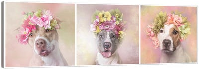 Pit Bull Flower Power, Bridie, Dice And Chita Canvas Art Print