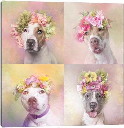 Pit Bull Flower Power, Chita, Bridie, Erica And Dice Canvas Art Print