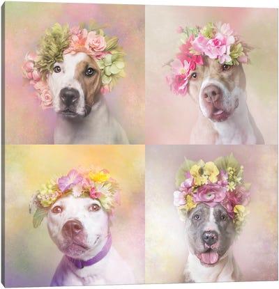 Pit Bull Flower Power, Chita, Bridie, Erica And Dice Canvas Art Print