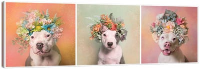Pit Bull Flower Power, Lucy, Treasure And Rain Canvas Art Print
