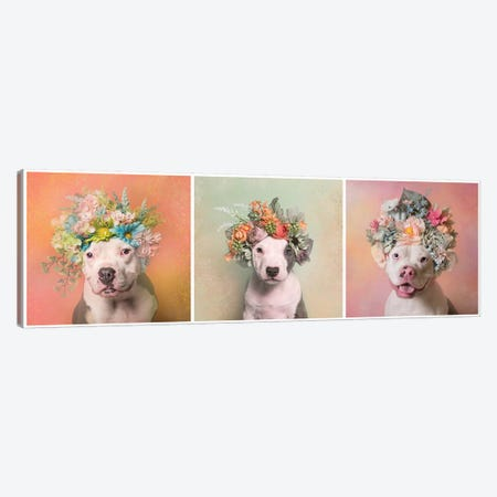 Pit Bull Flower Power, Lucy, Treasure And Rain Canvas Print #SGM80} by Sophie Gamand Canvas Art Print