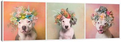Pit Bull Flower Power, Lucy, Treasure And Rain Canvas Art Print