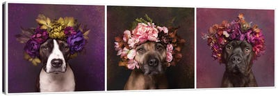 Pit Bull Flower Power, Suzie, Sweetie And Chopper Canvas Art Print