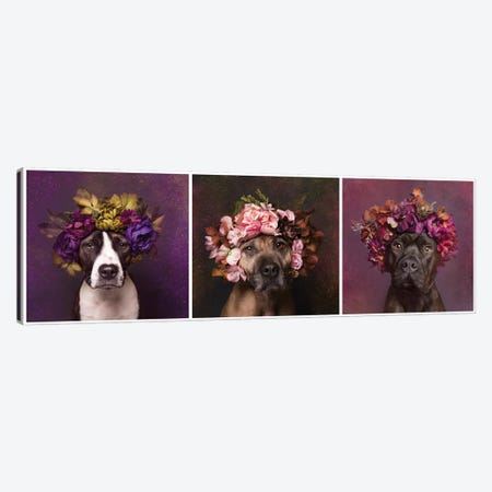 Pit Bull Flower Power, Suzie, Sweetie And Chopper Canvas Print #SGM81} by Sophie Gamand Canvas Print