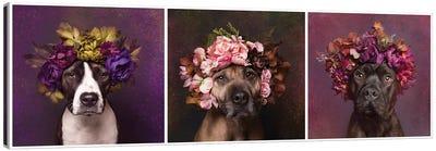 Pit Bull Flower Power, Suzie, Sweetie And Chopper Canvas Art Print