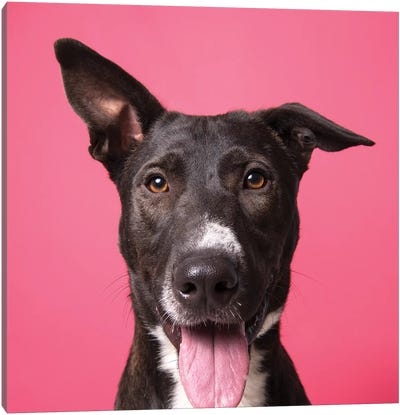 Pongo The Rescue Dog Canvas Art Print