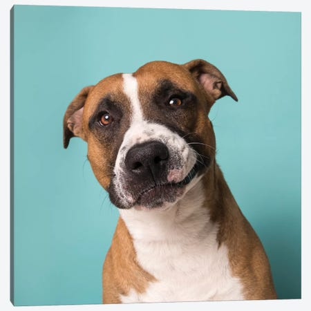Ramone The Rescue Dog Canvas Print #SGM87} by Sophie Gamand Canvas Wall Art