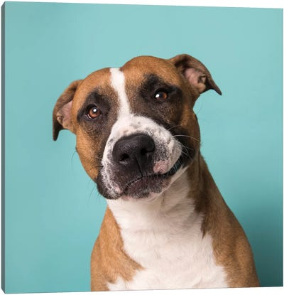 Ramone The Rescue Dog Canvas Art Print