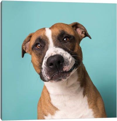 Ramone The Rescue Dog Canvas Art Print
