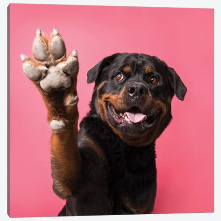 Ramone The Rescue Dog, Paw Up! Canvas Print #SGM88} by Sophie Gamand Canvas Print