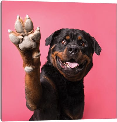 Ramone The Rescue Dog, Paw Up! Canvas Art Print