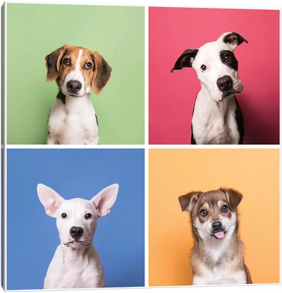 Rescue Puppies: Marshall, Bullet, Laila And Fuzz Canvas Art Print