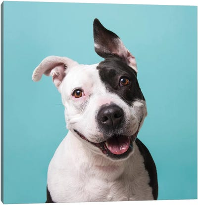 Roxie The Rescue Dog Canvas Art Print