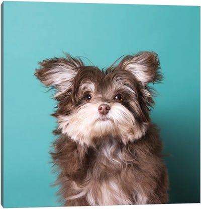 Slipper The Rescue Puppy Canvas Art Print