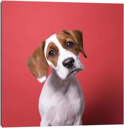 Stella The Rescue Puppy Canvas Art Print