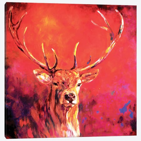 Sunrise Stag Canvas Print #SGN42} by Sue Gardner Canvas Artwork