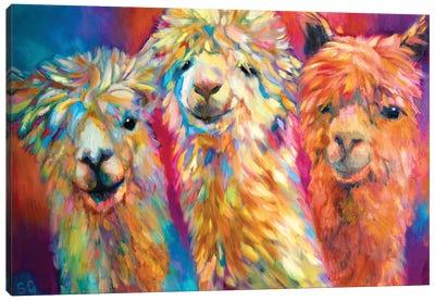 Three Alpacas Canvas Art Print