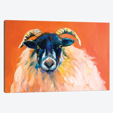 Swaledale Ram Canvas Print #SGN62} by Sue Gardner Canvas Artwork