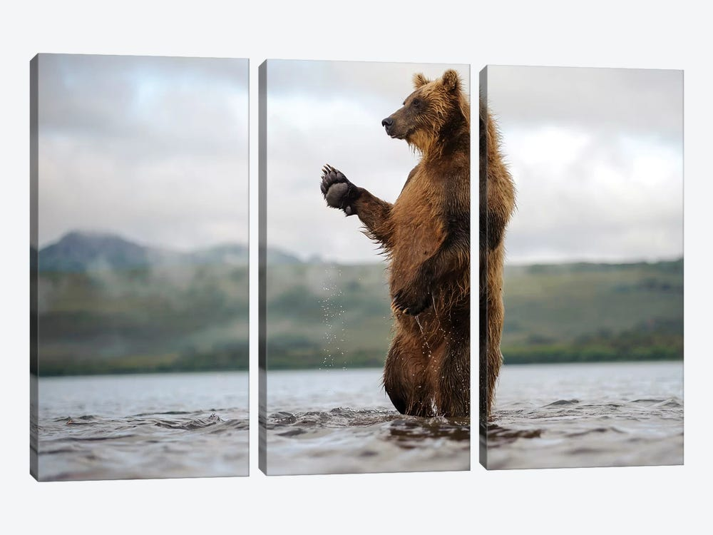Brown Bear Standing In River, Kamchatka, Russia by Sergey Gorshkov 3-piece Canvas Art