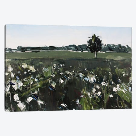Cotton Field NC Canvas Print #SHG11} by David Shingler Canvas Artwork