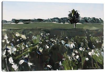 Cotton Field NC Canvas Art Print