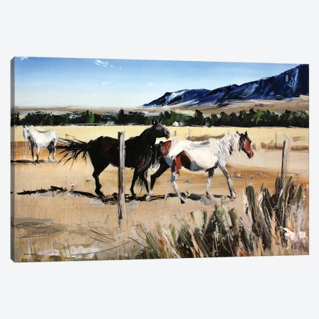 Dancing Horses, Red Lodge, MT Canvas Print #SHG13} by David Shingler Canvas Wall Art