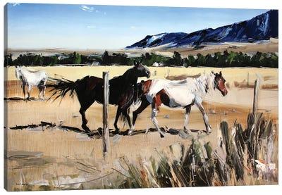 Dancing Horses, Red Lodge, MT Canvas Art Print