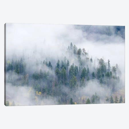Forest In The Clouds Canvas Print #SHL111} by Bill Sherrell Art Print
