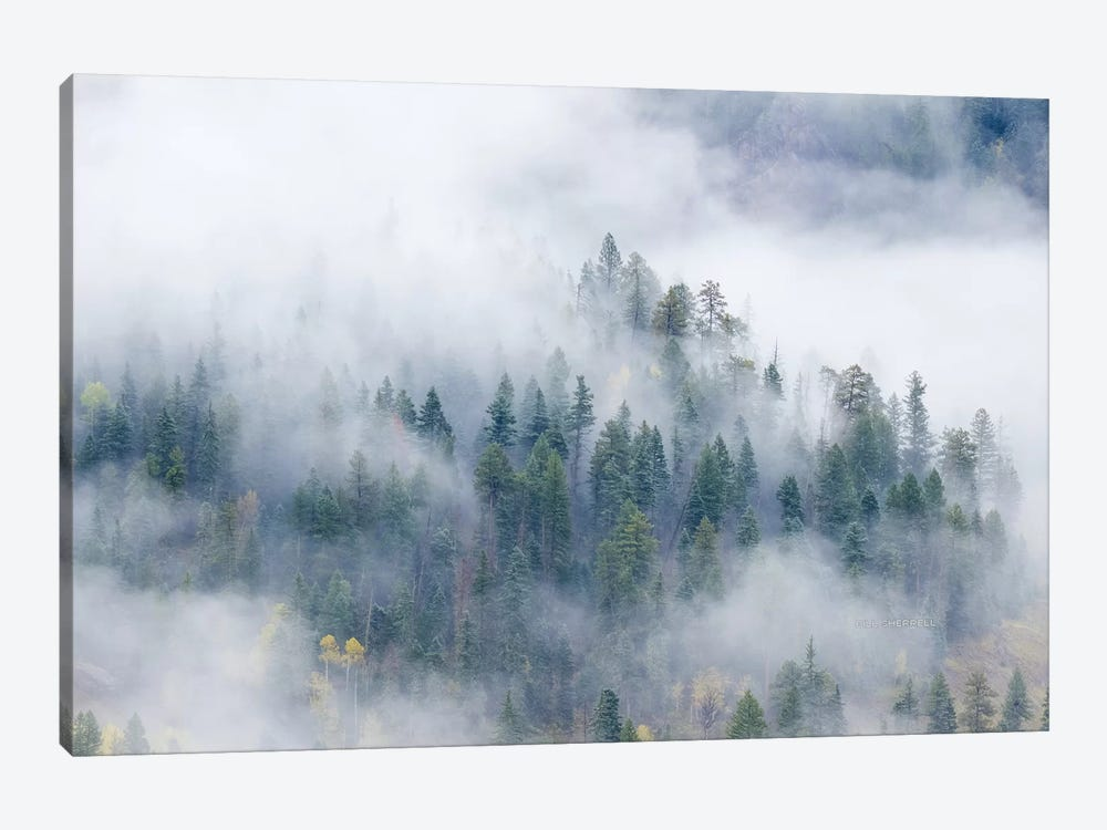 Forest In The Clouds by Bill Sherrell 1-piece Canvas Art Print