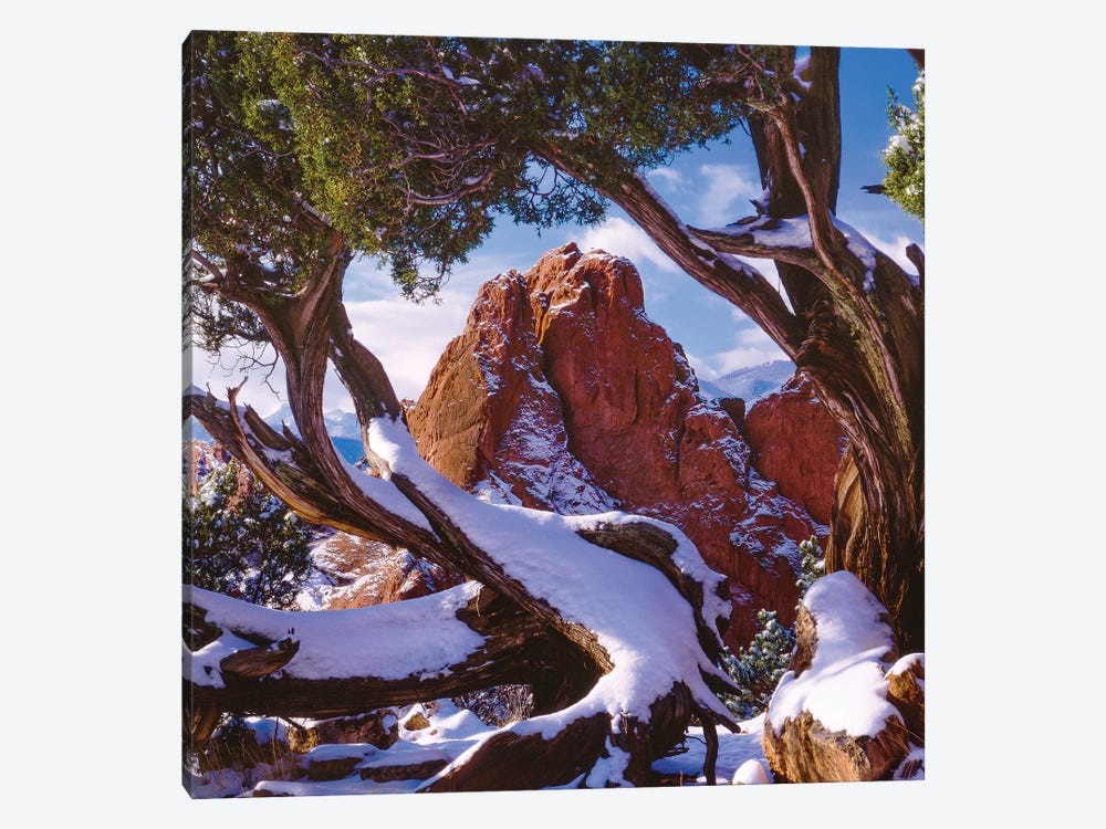Framed By Nature by Bill Sherrell 1-piece Canvas Art