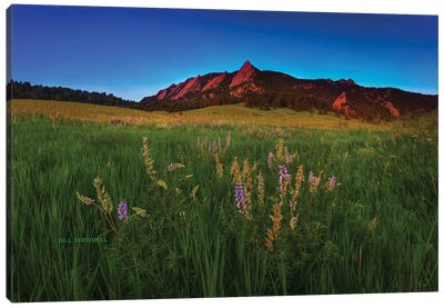 Glowing Flatirons And Wildflowers Canvas Art Print