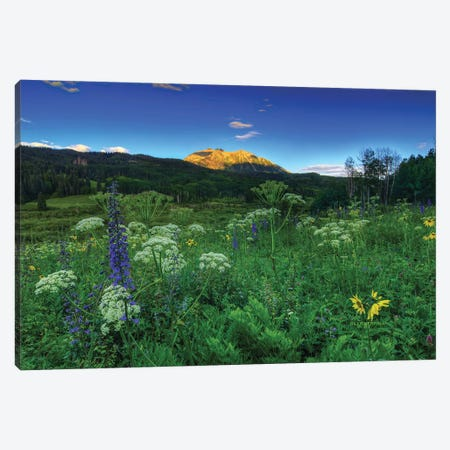 Light Whispers And Wildflowers Canvas Print #SHL135} by Bill Sherrell Canvas Art