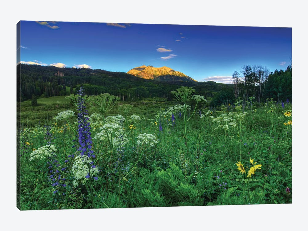 Light Whispers And Wildflowers by Bill Sherrell 1-piece Canvas Art Print