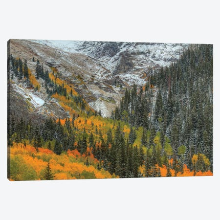 Mountains And Aspens Canvas Print #SHL144} by Bill Sherrell Canvas Print