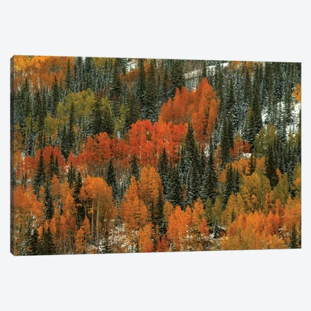 Orange Fire Canvas Print #SHL151} by Bill Sherrell Art Print