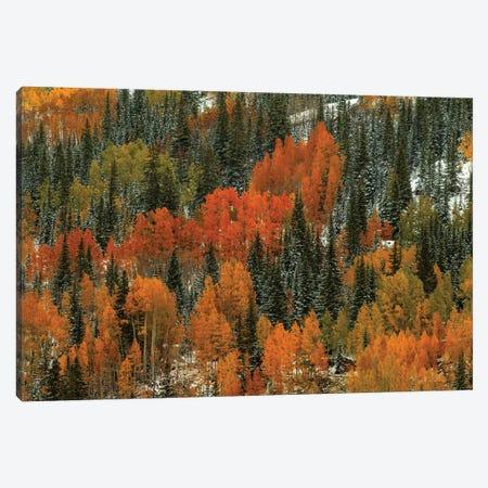 Orange Fire 3-Piece Canvas #SHL151} by Bill Sherrell Art Print
